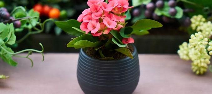 Доброе слово и цветку приятно