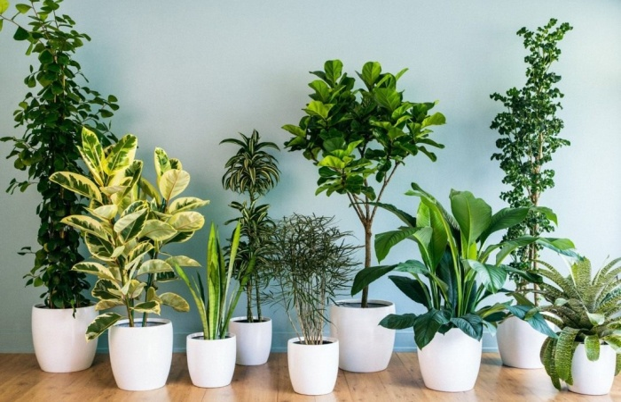 5 растений для детской