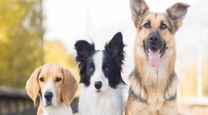 Как собаки общаются друг с другом?