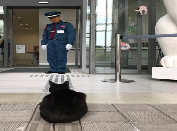 Два кота уже 2 года пытаются попасть музей, но их не пускают охранники