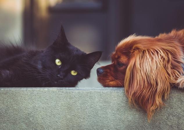 Коты против собак: Кто круче?