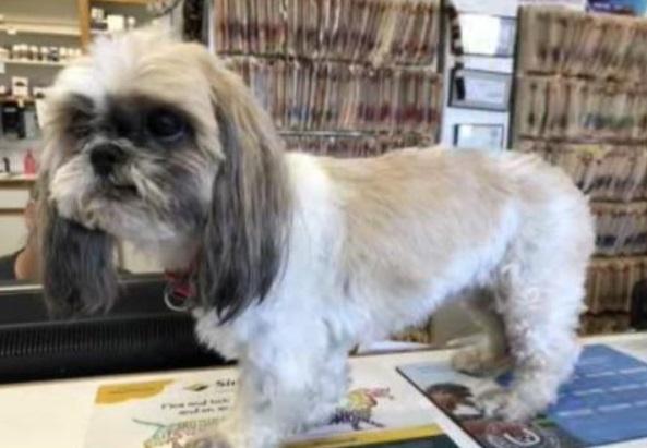 Семья 4 года искала пропавшую собаку, которая всё это время бегала рядом с домом