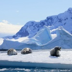 Зачем жители России собрались на Северный полюс?