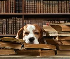 В столичных библиотеках дети смогут почитать книжки специально обученным собакам