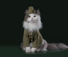 Котов отправят служить в армию