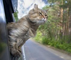 1 марта - первый день весны и день кошек