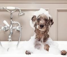 Учёные выяснили, что собаки перенимают характер и привычки своих хозяев