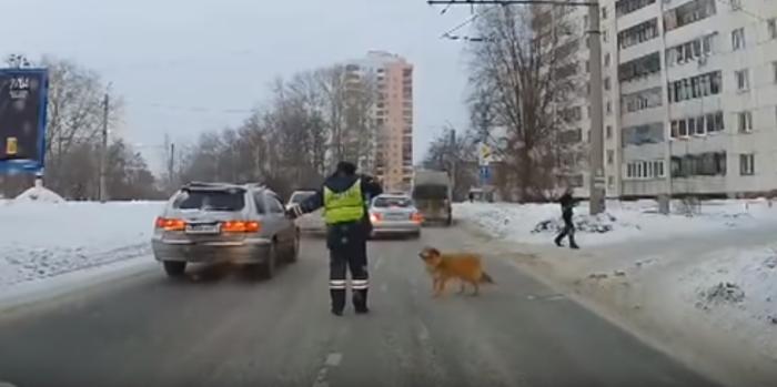 В Челябинске инспектор ГИБДД перекрыл движение, чтобы помочь хромой собаке перейти дорогу