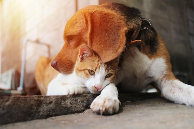 """Во Владикавказе нашли шестилетнего """"Айболита"""", который лечит бездомных кошек и собак"""