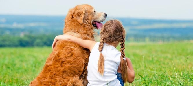 Сдать экзамен на «отлично» поможет собака