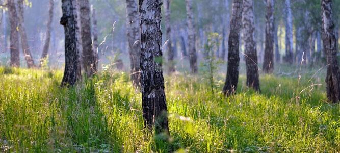 Школьников научат беречь лес