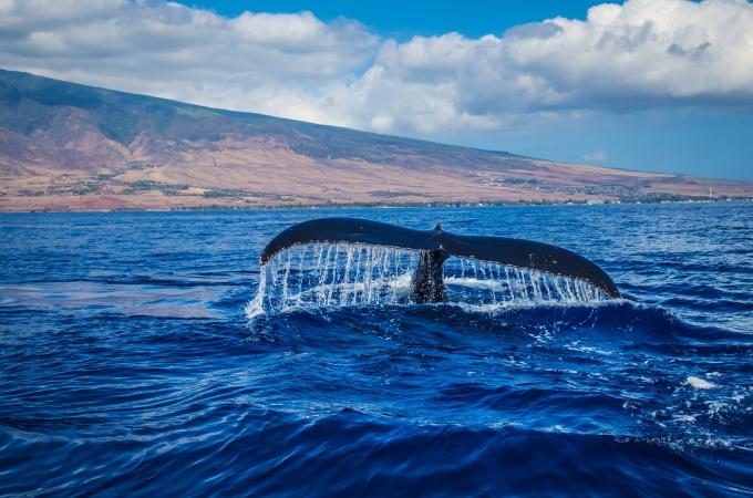Когда киты жили на суше?