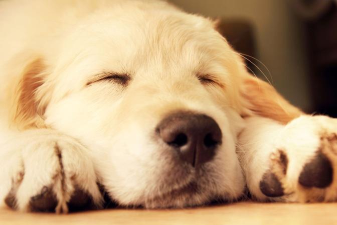 Хозяин научил своего пса ложиться спать по звуку выключения Xbox