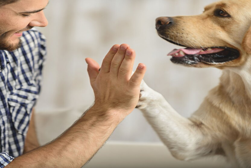 Каких собак больше всего любят москвичи?