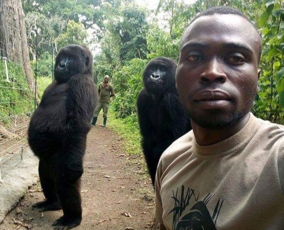 В Конго рейнджер сделал селфи с гориллами в человеческой позе и собрал сотни тысяч лайков