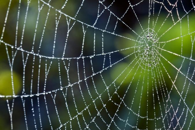 Какими узлами паук связывает паутину