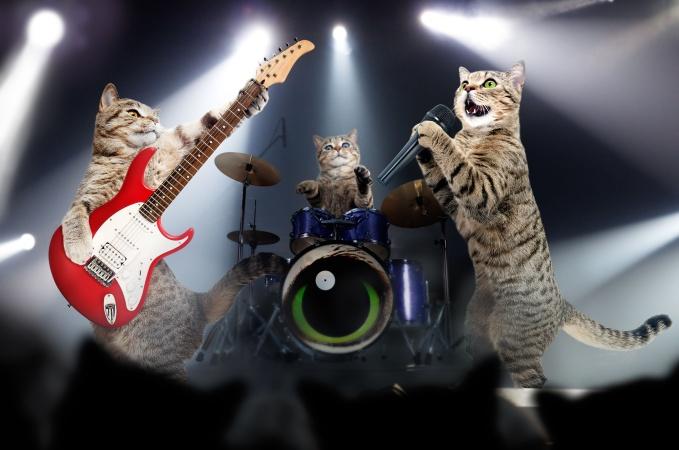 Spotify запустил музыкальный сервис для котиков