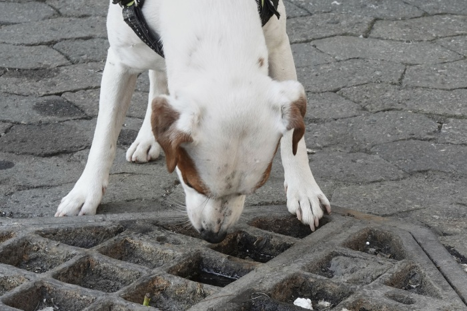 Учёные выяснили, что собаки могут найти добычу по теплу, исходящему от неё