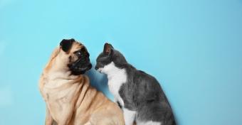 #Кошкипротивсобак!  Хозяева домашних животных запустили в соцсетях новый челлендж