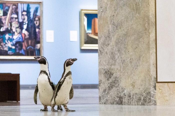 Караваджо - любимый художник пингвинов. Морских обитателей сводили в музей.
