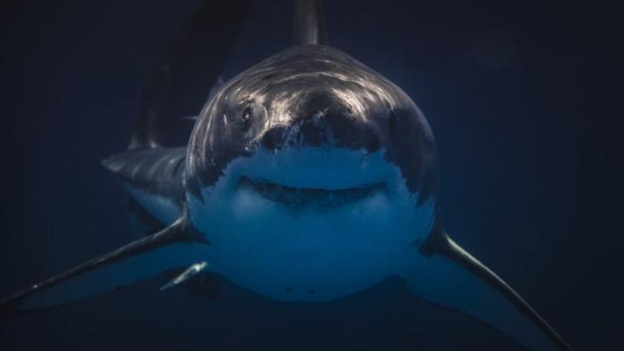Хотите зафрендить акулу? Читайте далее, как это сделать