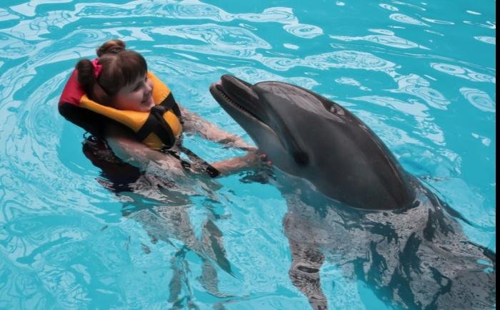 Настоящих дельфинов заменят роботы