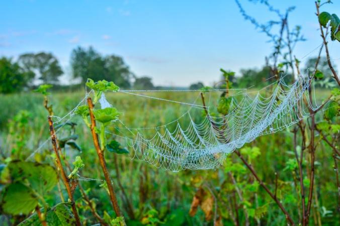 В Австралии пауки сплели гигантскую паутину