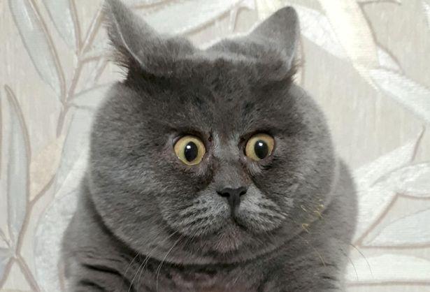 Удивленный котик Федя покорил российский и зарубежный Интернет