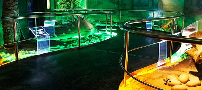 Радиоэкскурсия по Государственному Дарвиновскому музею
