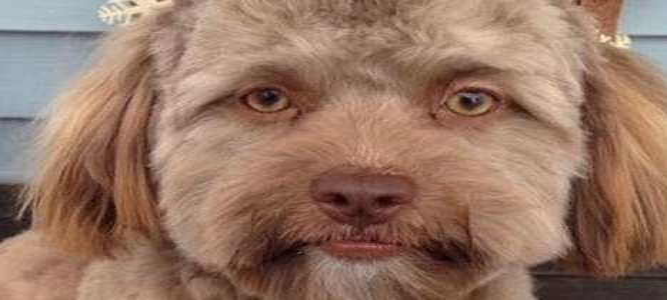 Собака с человеческим лицом