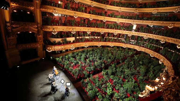 Классика для цветов! Первый после карантина концерт испанские музыканты сыграли для растений