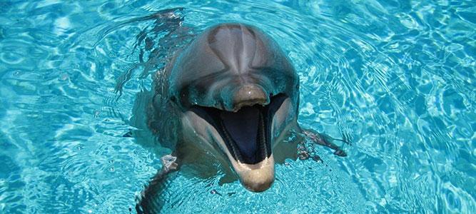 Оркестр для дельфинов
